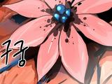 Zygaena's Flower