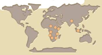 Rhino map