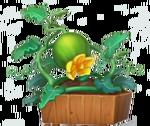 Watermelon-0