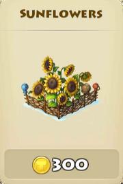 Sunflowers winter