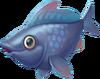 Grey Cod
