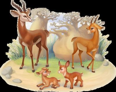 Gazelle Family