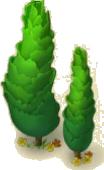 Two Cedar Trees