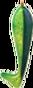 Shad Icon