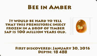 Bee-in-Amber-Fossils