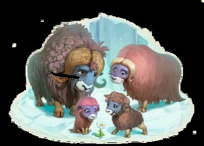 Muskox Family