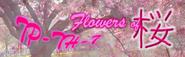 Flowers of Sakura