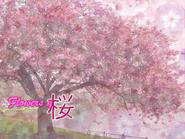Flowers of Sakura-bg