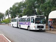 Volvo B10M Articulated PMC Adelaide