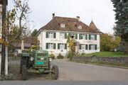 Kyburg Hirschen