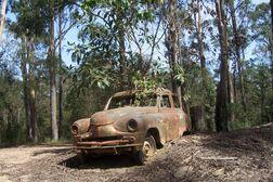 Standard Vanguard phase 2, Tamban Forest, Kempsey, Australia