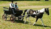 Einspaenner-wagonette