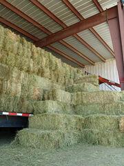 Grass hay by David Shankbone