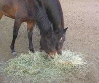 HorsesAndHay