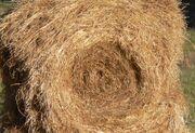 Round hay bale, partially eaten