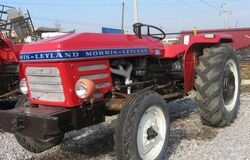 Morris-Leyland 184 - 1982