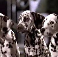 101 Dalmatians 1996 Home Video Trailers Trailer Transcripts Wiki Fandom