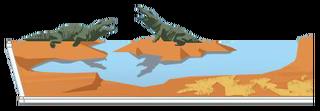 Krokodillenmeer