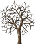Gleaming Tree