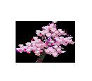 Sakura (Decoration)