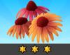 Achievement Echinacea III
