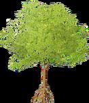 Large Mangrove