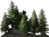 Conifer Grove