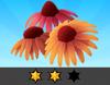Achievement Echinacea II