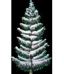 Snowy Small Spruce