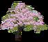 Hanami Sakura