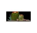 Double Cactus