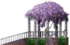 Wisteria Pavilion
