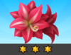 Achievement Amaryllis III