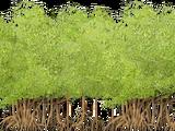Mangrove Thicket