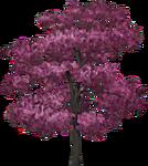 Pinkwood