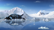 Polar Theme