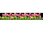 Tulip Row