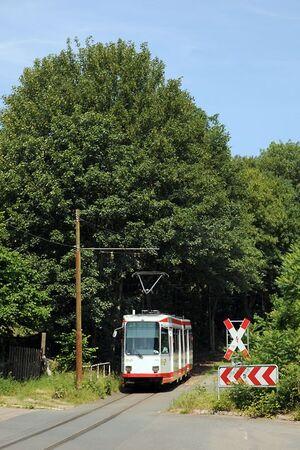 Papenholz lijn310 M6