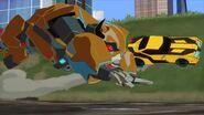W.W.O.D.? Bee chases Terrashock