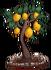 Lemons (fully grown) - Farming 2016