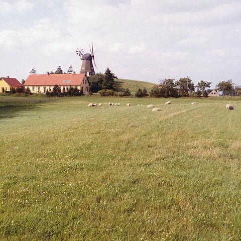 Denmark's meadows