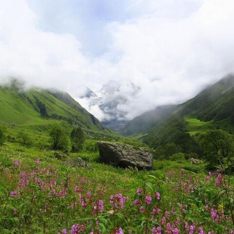 A View of Valley of Flower