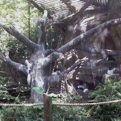 thumb|400px|Eastern black-and-white colobus monkey exhibit in Gorilla World