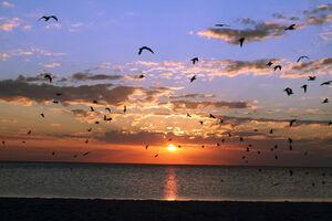 Sunset Birds Best
