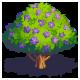 Tree jacaranda