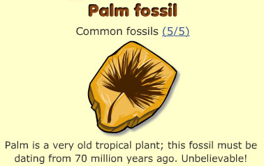 Palm fossil
