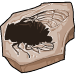 Cicada fossil