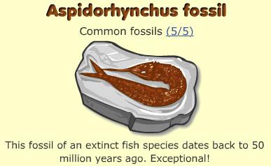 Aspidorhynchus fossil