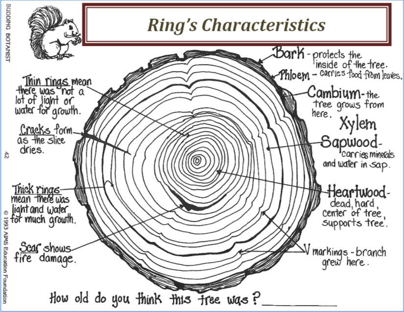 Characteristics Of Trees U0026 39  Rings