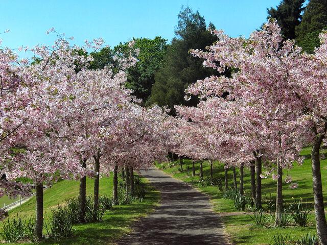 File:Cherry grove2.jpg